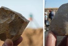 Two examples of stone tools from Ain Boucherit. An Oldowan core from which sharp-edged cutting flakes were removed (left). Sharp-edged cutting flake that may be used for butchery activities on the bones (right). Image Credit: Mohamed Sahnouni.