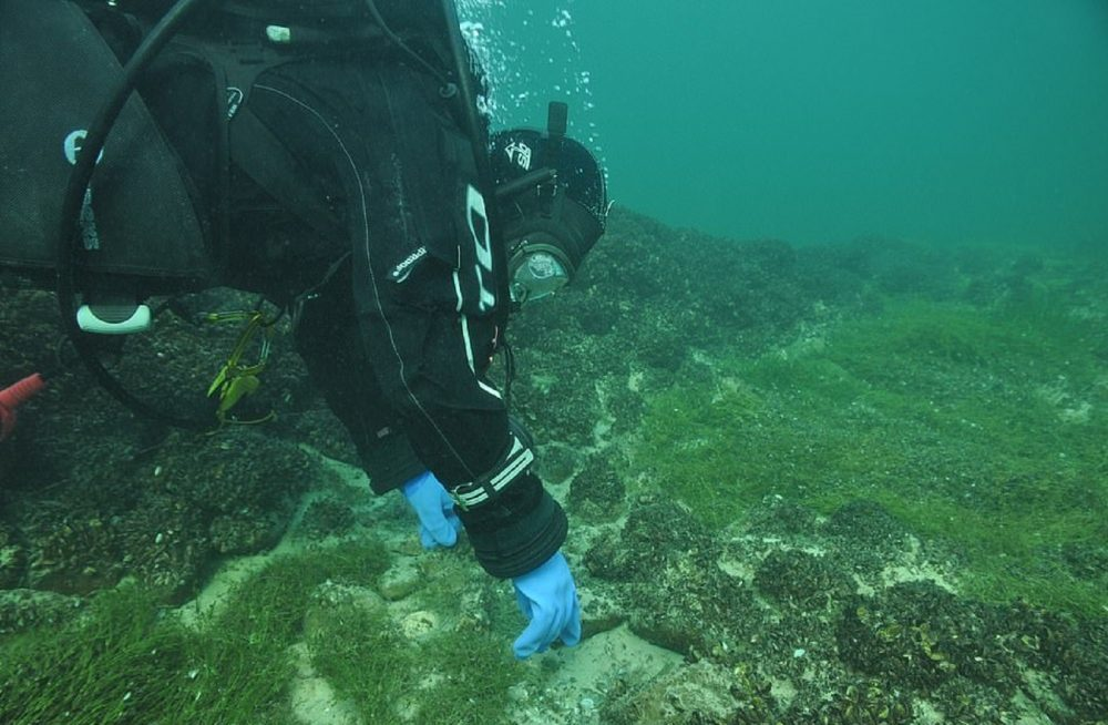 A diver inspecting the underwater site. Image Credit: Thurgau Archaeological Office.