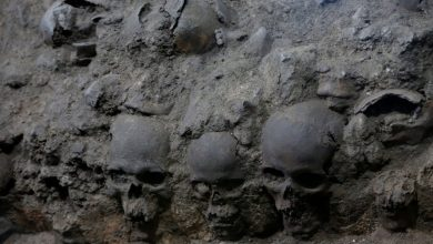 An image of the skulls of the Tzompantli at Tenochtitlan. Image Credit: REUTERS / Henry Romero.
