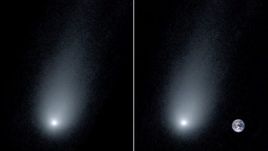 A comparative view of Comet Borisov and our planet. The comet is believed to be around 14 times the size of Earth. Image Credit: Pieter van Dokkum, Cheng-Han Hsieh, Shany Danieli, Gregory Laughlin.