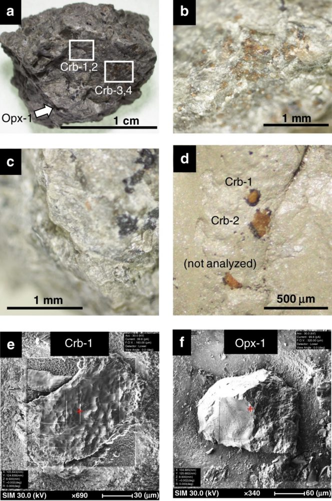 Optical and secondary electron images of ALH carbonates. Image Credit: Journal Nature.