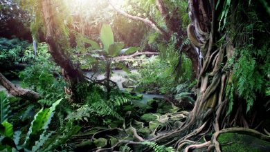 An image of a tropical forest. Antarctica may have looked like this more than 90 million years ago. Shutterstock.