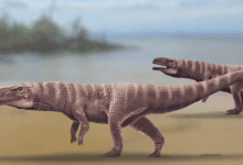 Reconstruction of Batrachopus grandis, a proposed crocodylomorph that lived over 110-million-years ago and left tracks in the Jinju Formation of South Korea.