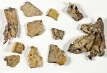 Fragments of the scroll of the Twelve Minor Prophets. Credit: Shai Halevi / Israel Antiquities Authority