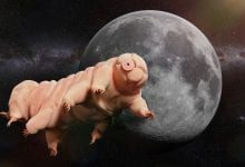 Tardigrades are specialists in survival, they can even withstand the conditions in space. Credit: Shutterstock