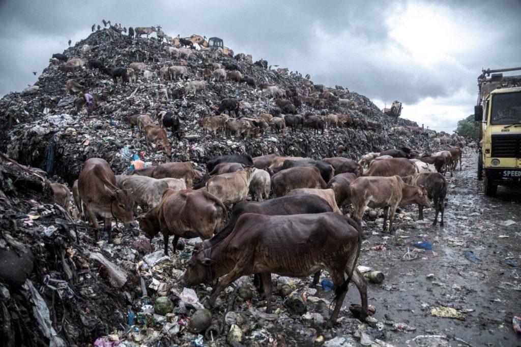 'Toxic Environment' by Supratim Bhattacharjee of India