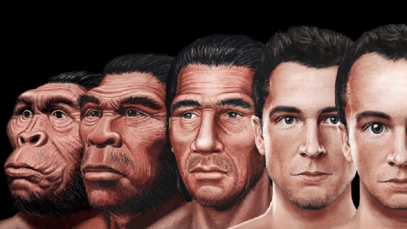 Evolution Hasn't Stopped: This is what the Human Face Will ...