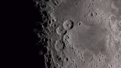 Photo of There Are Plants And Animals on the Far Side of the Moon Now