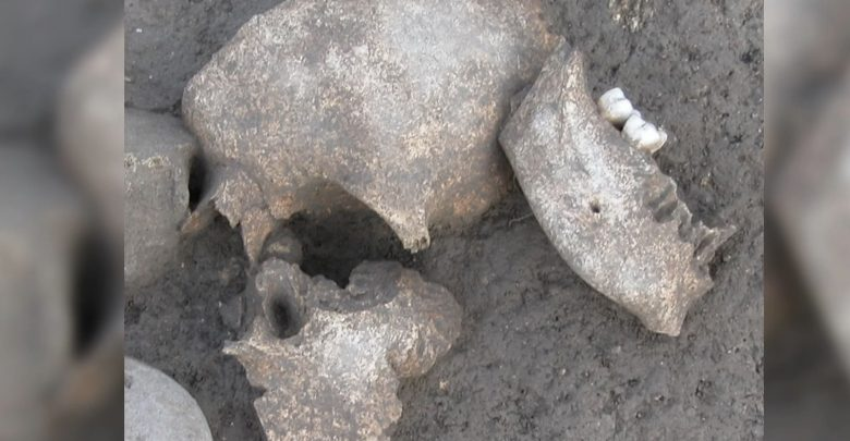 Human remains found at the Celtic site of Le Cailar in southern France. Image Credit: Fouille Programmée Le Cailar-UMR5140-ASM