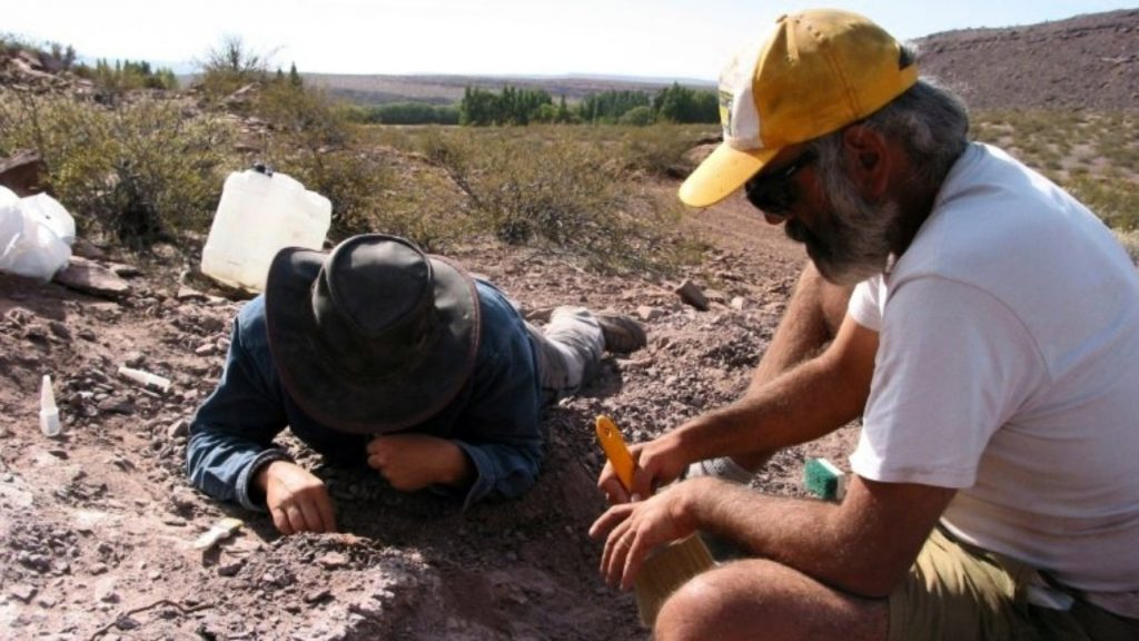 Three separate members of the species were found by experts in Argentina. Image Credit: The Dinosaurs lived some 110 million years ago. Image Credit: Agencia CTyS/AFP / HO
