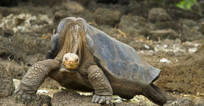 Photo of Lonesome George the Giant Tortoise's DNA Reveals Clues to Longevity