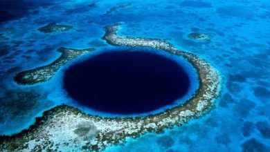 Photo of Mysterious 'Tracks' Spotted at the Bottom of The Great Blue Hole