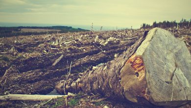 Photo of Study Finds Organic Food is Worse for Earth's Climate Than Non-Organic Food