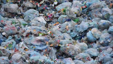 Photo of In Just 3 Months Australia Cut Its Plastic Bag Usage by 80 Percent