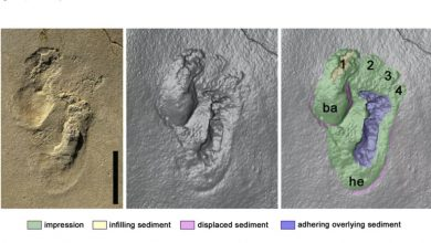 Photo of Controversial Footprint Find Suggests Human-likeCreatures Roamed Crete 6M Years Ago