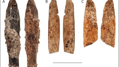 Photo of Researchers Find 90,000-Year-Old Weapons That Belonged to 'Mystery Culture'