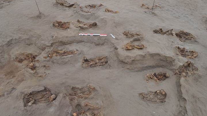Child and camelid skeletons buried in windblown sand at the HLL site. Image Credit: PLOS ONE.