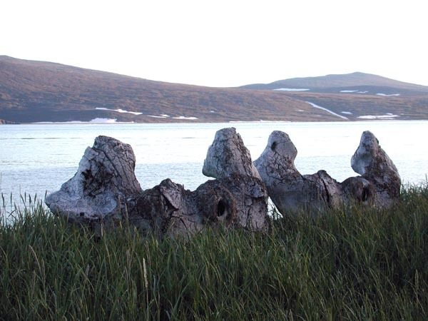 Yttygran Island, whale bone alley. Image Credit: Wikimedia Commons.