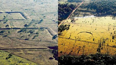 Photo of How Satellite Images Helped Discover an Ancient Civilization in the Amazon