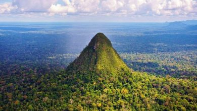 Photo of More Than 10,000 Years Ago, People inhabited the Amazon Creating Settlements