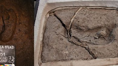 Photo of Researchers Find the Oldest Human Footprint in the Americas
