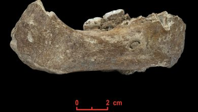 Photo of Researchers Find Human Ancestor That Lived in Oxygen-Deprived Tibet 160,000 Years Ago