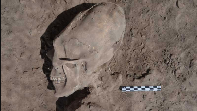 Photo of Here Are 5 of the Most Bizarre Elongated Skulls Ever Found