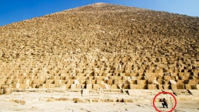 Photo of Here Are 10 Images That Show Just How Freakishly Massive The Great Pyramid of Giza Really is