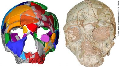 Photo of A 210,000-Year-Old Skull Found In Greece is the Oldest Fossil Outside of Africa