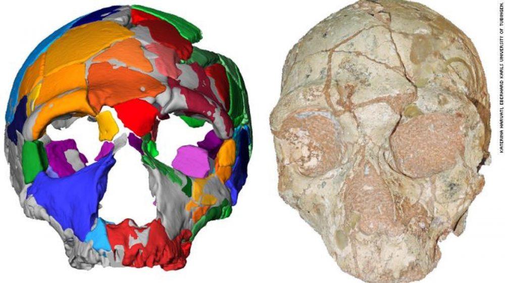 The Apidima 2 skull and its reconstruction. Image Credit: K. Harvati / Eberhard Karls University of Tubingen.