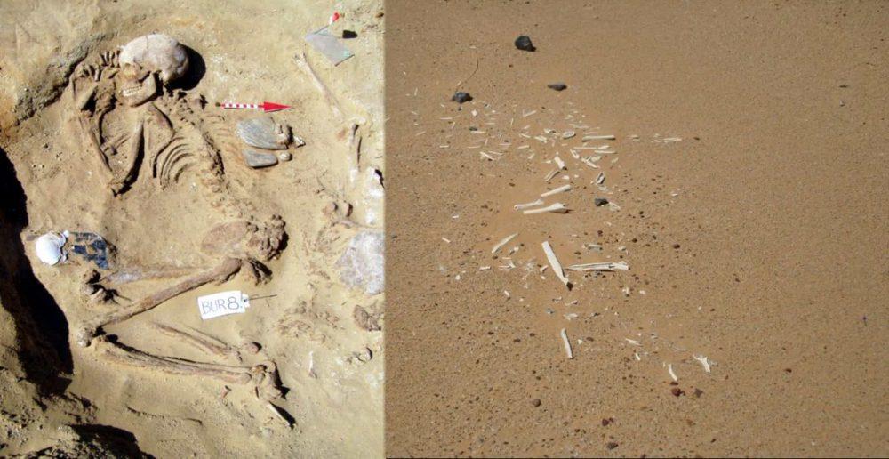 Well preserved remains vs. wind‐eroded remains at Gebel Ramlah. Image Credit: Joel D. Irish, Czekaj- Zastawny Agnieszka, Jacek Kabacinski / The Conversation.