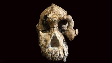 Photo of Skull of Humankind's Oldest Ancestors Found: 3 Things You Need to Know