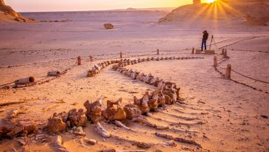 Photo of There's a Valley of Whales in the Middle of Egypt's Desert and its Millions of Years old