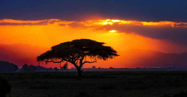 A view of the African Savannah. Shutterstock.