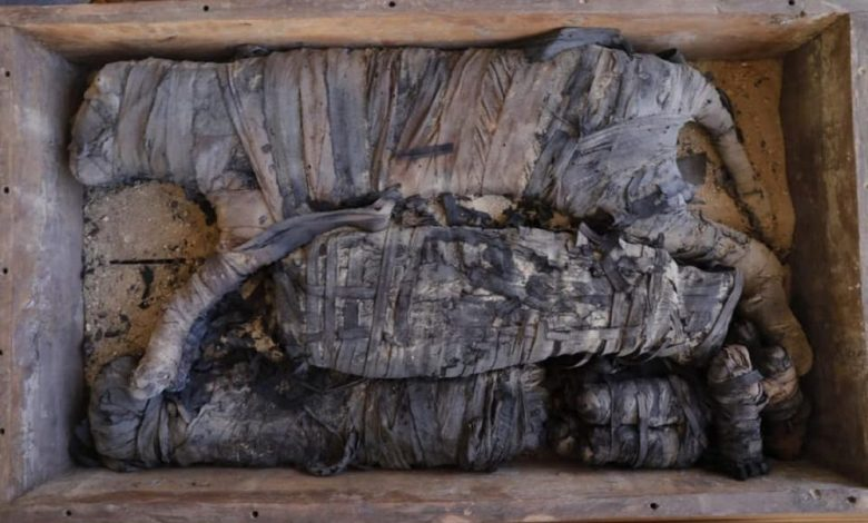 An image of the mummified cats discovered at Saqqara. Image Credit: Egyptian Ministry of Antiquities / Facebook.