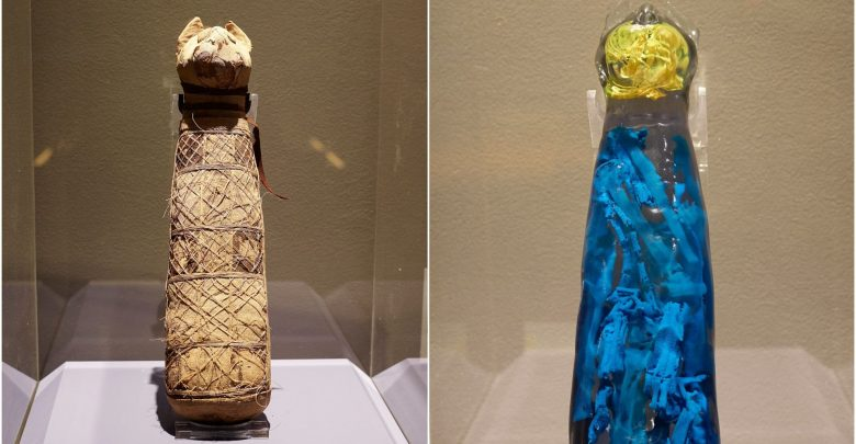 Image of the mummified cat (left) and the 3D reconstruction of its interior. Image Credit: Museum of Fine Arts of Rennes / INRAP.