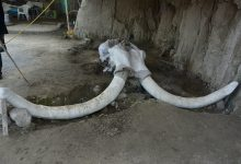 Photo of How 15,000 Years Ago, Ancient Humans Hunted Mammoths With Complex Traps in Mexico