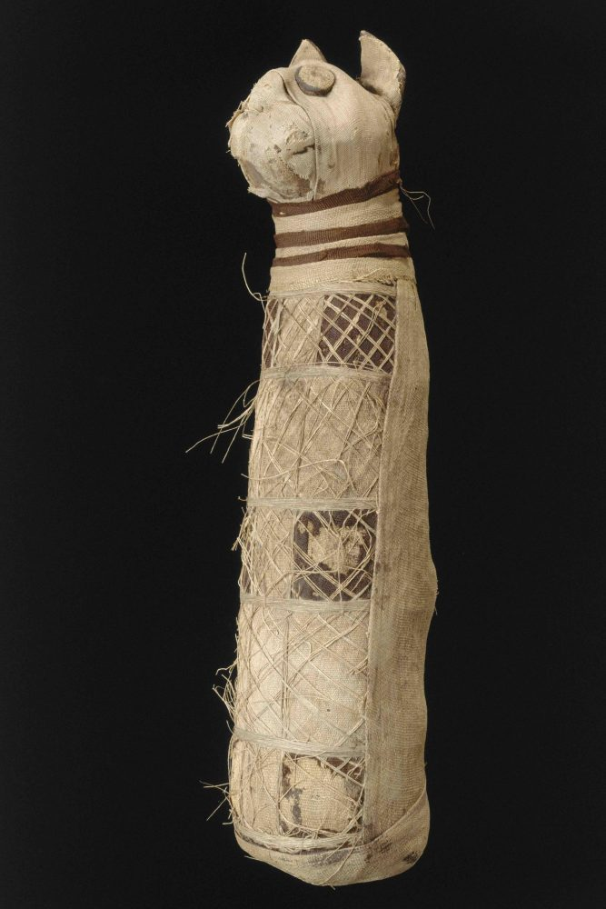The Cat Mummy from the Rennes Museum of Fine Arts. Image Credit: Museum of Fine Arts of Rennes / INRAP.