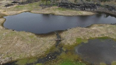 Aerial image of the Budj Bim Cultural Landscape and stone-lined channels. Image Credit: Gunditj Mirring Traditional Owners Aboriginal Corporation.