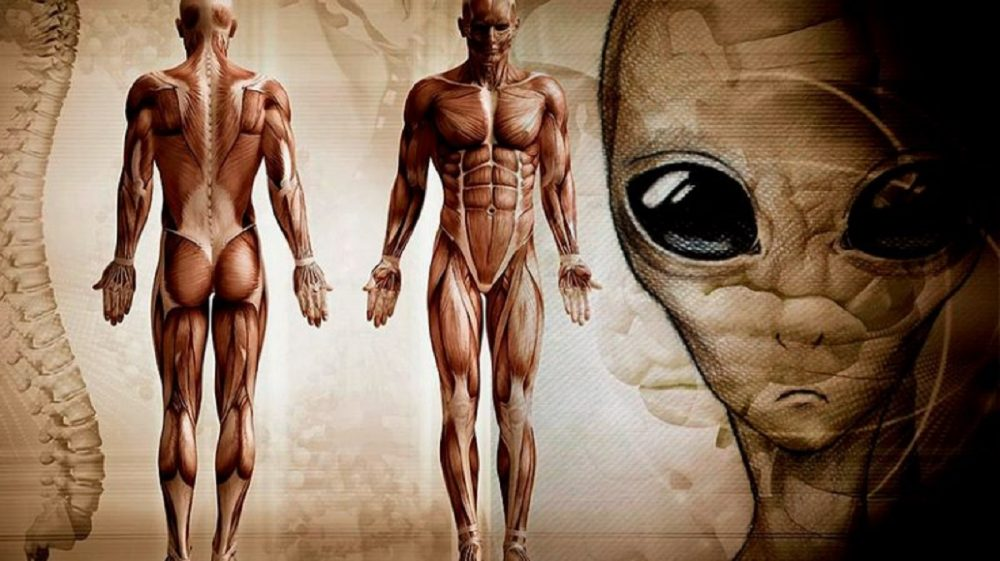 An image of the human body next to a depiction of an alien being.