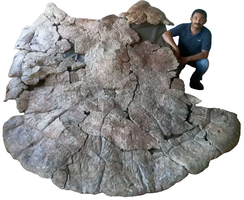 Venezuelan Palaeontologist Rodolfo Sánchez and a male carapace of Stupendemys geographicus, from Venezuela, found in 8 million years old deposits. Image Credit: Jorge Carrillo / University of Zurich.