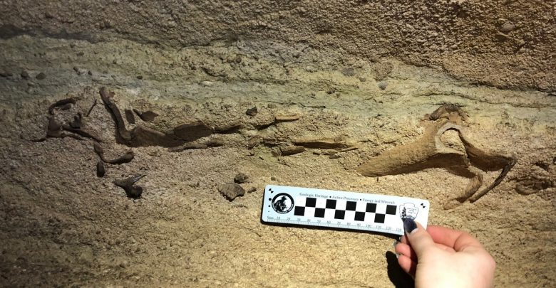 Photo of Massive 300-Million-Year-Old Shark Skull Found in An Underground Kentucky Cave
