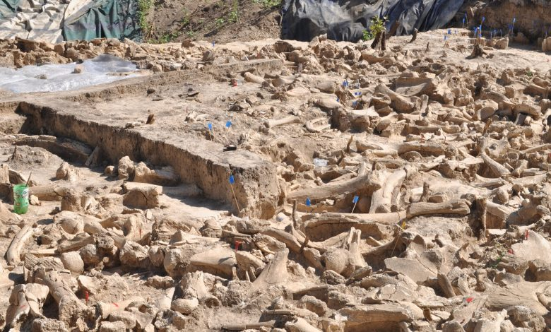 An image of the archaeological site where the mammoth bone structure was found. Image Credit: Alex Pryor.