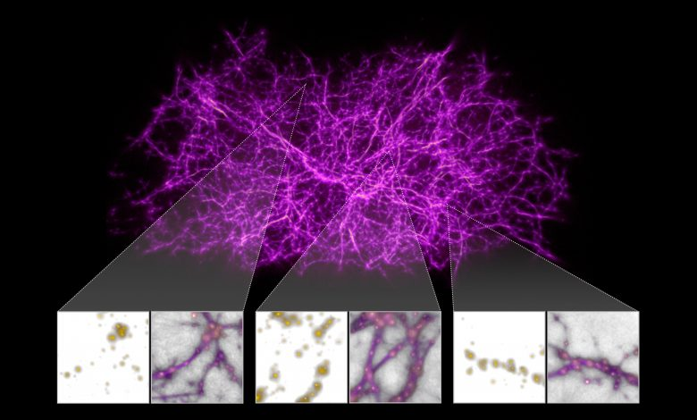 Photo of Scientists Find Uncanny Resemblance Between Biological and Cosmic Networks