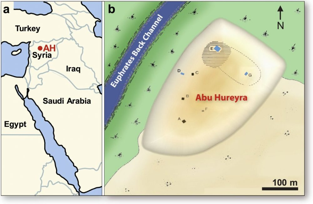 Location of Abu Hureyra (adapted from Moore et al.. (a) Map of the Middle East, showing Abu Hureyra location (AH) in Syria. (b) Map of the Abu Hureyra tell, showing locations of excavation trenches labeled A-G near a back channel of Euphrates River that is now abandoned. Sediment samples from Trenches D, E, and G (blue rectangles) contain abundance peaks in YDB proxies, including spherules, nanodiamonds, meltglass, and platinum.
