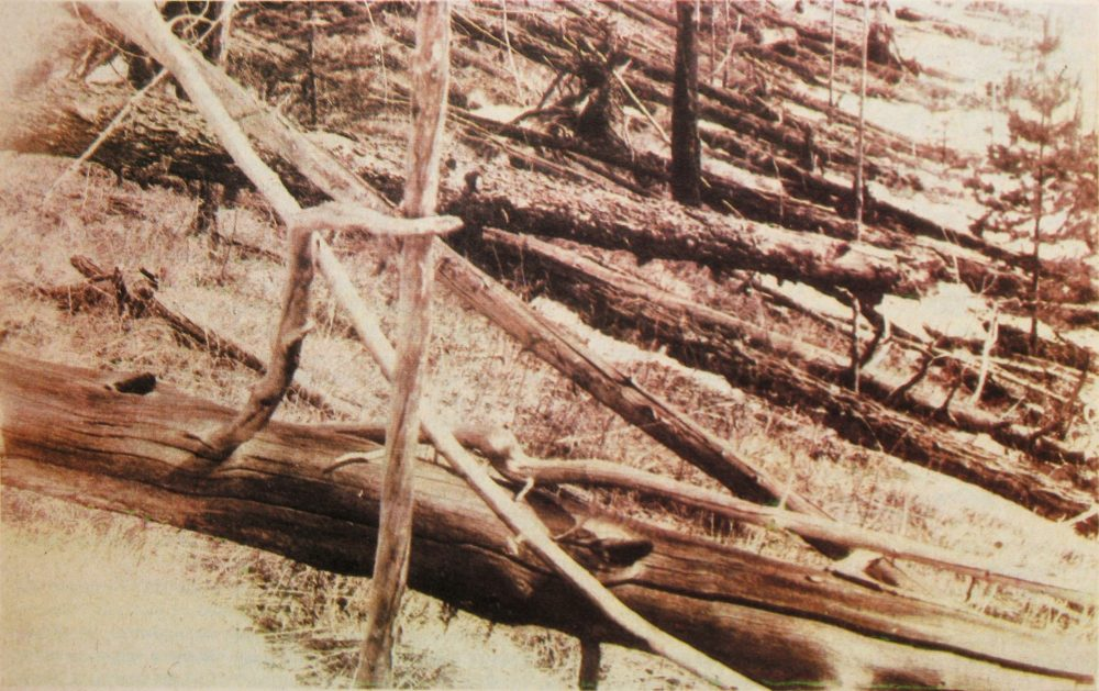 A photograph from Kulik's 1929 expedition taken near the Hushmo River showing the many trees affected by the so-called Tunguska Event. Image Credit: Wikimedia Commons / Public Domain.
