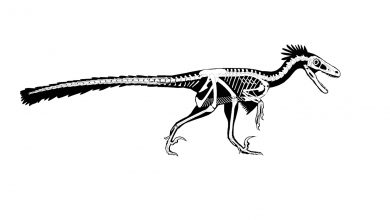 "Photo of New ""Feathered Raptor"" Species of Dinosaur Discovered in New Mexico"
