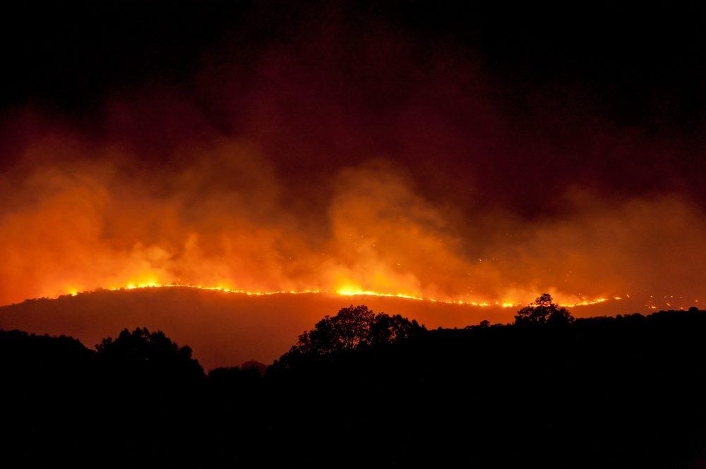 An image of a forest fire. Shutterstock.