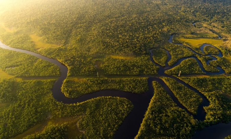 An aerial view of the Amazonian Rainforest. Shutterstock.