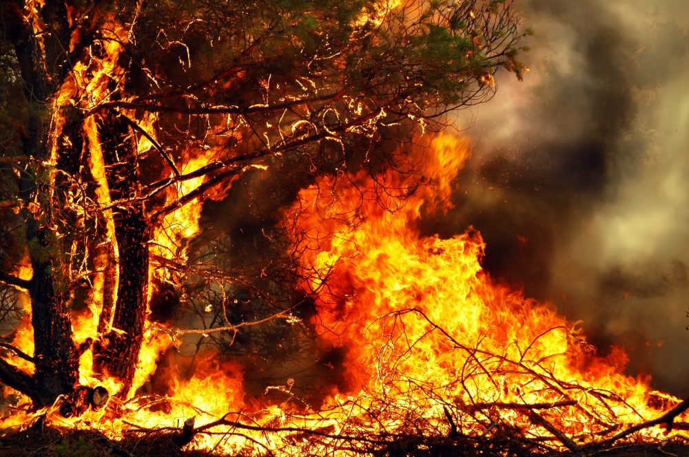 An image of a tree burning in a forest fire. Shutterstock.